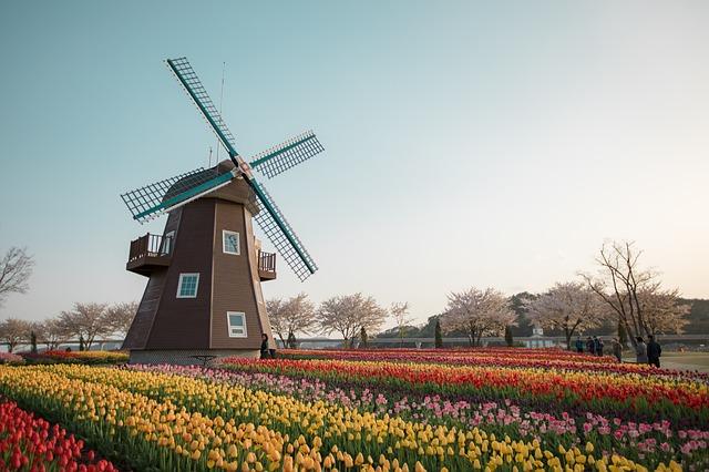 Traduzione professionale da e verso l'olandese perché è importante